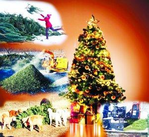 Журналист получил задание - выяснить судьбу новогодней ели