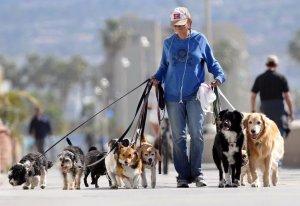 Собаки в городе. Беседуем с собаководами о выгуле собак в г. Строителе